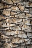 Background of palm tree trunk stock images
