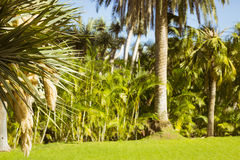 Background with palm trees in an exotic Park, Loro parque, Tener Stock Images