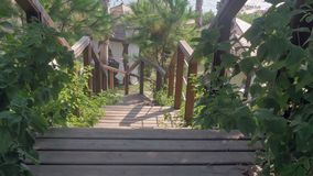 Background with palm trees and wooden staircase. 4k stock video footage