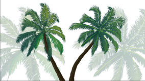 Background palms Stock Photo