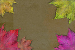Background paper and leaves Royalty Free Stock Photo