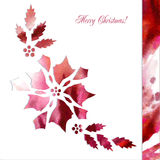 Background  with paper poinsettia flowers Stock Photos