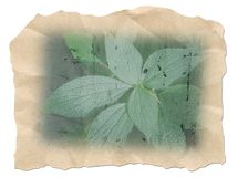 Background, parchment Stock Images