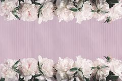 Pink peony on a striped pink background. Spring mood. Abstract background in vintage style. Background in pastel colors. Pink peony on a striped pink background royalty free stock image