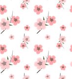 Background pattern with cherry blossoms Stock Photo