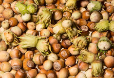 Background pattern formed by the hazel nuts Stock Image