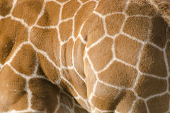 Background pattern of giraffe skin Royalty Free Stock Image