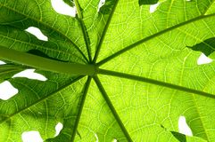 Background  and pattern of green tropical leave Royalty Free Stock Photos