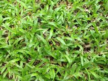 Natural green grass patch Stock Images