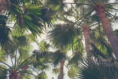 Background of pattern palm trees and leaves Royalty Free Stock Image