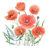 Background Pattern With Red Poppy. Royalty Free Stock Photography
