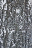 Background Pattern with Texture of Old Birch Bark Stock Photography
