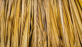 Background pattern thatch texture Royalty Free Stock Image