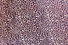 Background with pattern of wild animal fur. On cloth Royalty Free Stock Photography