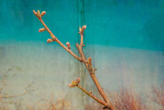 Background with peach blossom branch Stock Image