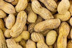 Background peanut light beige base untreated long many beans earthy culinary base stock photos
