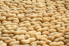 Background of peanut Royalty Free Stock Photo