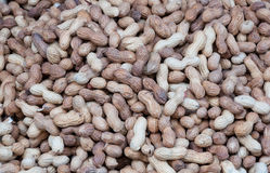 Peanuts in shell background Stock Image