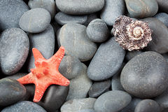 Background of pebbles with starfish Stock Photography