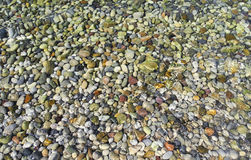 Background pebbles under water. Stock Photography