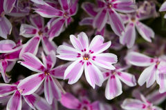 Background - perennial flowers Stock Photo