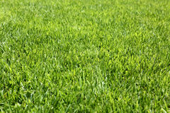 Background of Perfect Cut Green Grass Royalty Free Stock Images