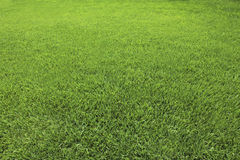 Background of Perfect Cut Green Grass Royalty Free Stock Photo
