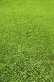 Background of Perfect Cut Green Grass Stock Images