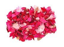 Background of petals. Stock Photos