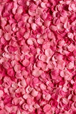 Background of petals Royalty Free Stock Images