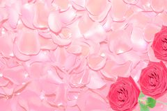 Background from petals of red roses. Royalty Free Stock Photography
