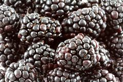 Background photo of blackberry Royalty Free Stock Images