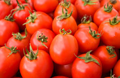 Background of  picked tomatoes. Background of red freshly picked tomatoes Stock Image