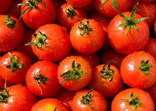 Background of  picked tomatoes. Background of red freshly picked tomatoes Stock Images