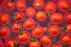 Background of  picked tomatoes Royalty Free Stock Photo