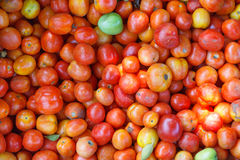Background from picked tomatoes Royalty Free Stock Image