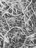 Background picture of hay. Black and white close up picture of hay Stock Image