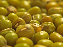 Background Picture of Mung Beans. This is a Background Picture of Mung Beans stock images