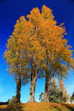Background Picture of Tree in Autumn Royalty Free Stock Images