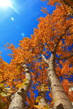 Background Picture of Tree in Autumn Royalty Free Stock Photos