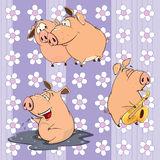 A background with pigs Stock Image