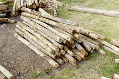 Background of piled tree trunks Royalty Free Stock Image