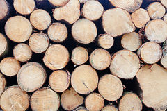 Background of piled trunks. Background fresh piled tree trunks with the cut face showing Stock Photos