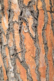 Background, pine bark Royalty Free Stock Photos