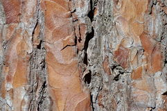 Background of pine bark Royalty Free Stock Photos