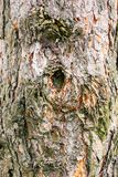 Background of pine bark royalty free stock images