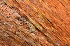 Background - Pine Bark. Wood background - Pine Bark. Tree in the forest Stock Photo