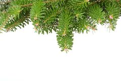 Background with  pine branches Stock Photo