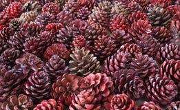 Background pine cone Stock Photos