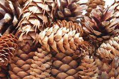 Background of pine cones Royalty Free Stock Images